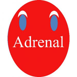 Adrenal dictionary